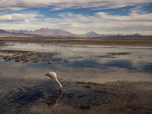 03 tercer lugar vivar morales valeska-fccv-chilean flamenco
