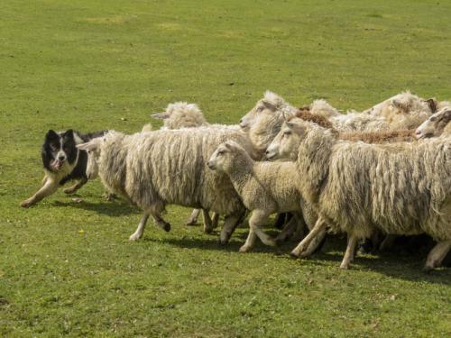 22 aguila garcia jorge-fccch-el ovejero