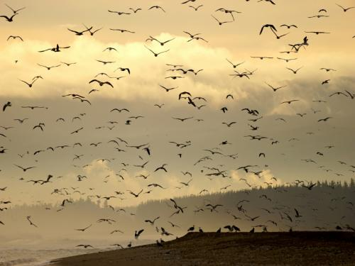 29 stoiber bornscheuer carmen-fcc-aves al vuelo
